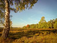 Golden autumn in the Lüneburg Heath near Undeloh