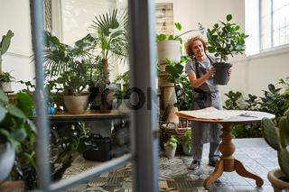 Florist bereitet Zimmerpflanze für den Versand vor