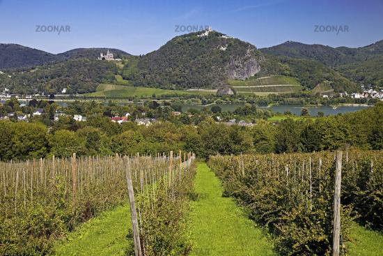 view from Rodderberg to the Siebengebirge hills, Wachtberg, North Rhine-Westphalia, Germany, Europe