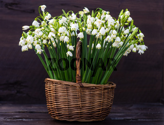 Basket full of snowdrops
