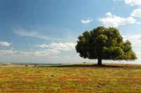 Irregular tree in rural field