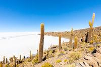 Bolivia Uyuni Incahuasi island salar view