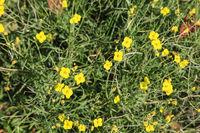 Wildflower meadow in Germany