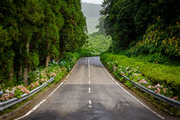 Country road on Sao Miguel with many flowers and forest