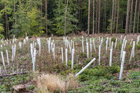Afforestation in a forest