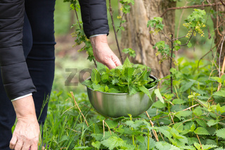 Woman picking nettle at garden