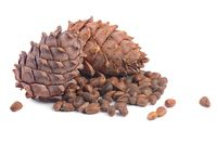 Cedar cone close up isolated on white background