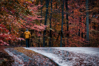 Colorful Autumn Forest Path Nature Leaves Trees Crowded Orange Red Park Road Trail Outdoors Walking