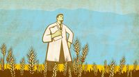 Scientist in the Middle of Wheat Field Retro