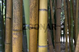 Brauner und grüner Bambus