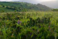 landscape nature summer