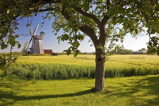 wind mill Bierde, Petershagen, East Westphalia, North Rhine-Westphalia, Germany, Europe