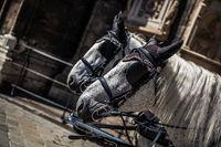horses on historic centre  square, tourism monument