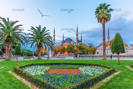 The Blue Mosque and the flower bed in the Sultan Ahmet park, Istanbul,Turkey