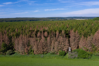 sterbende Fichtenwälder im Harz