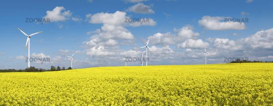 Blooming rape field with wind turbines