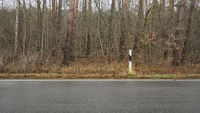 Roadside with reflector post in front of dense undergrowth, Germany