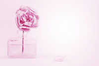 Pink rose in the small bottle
