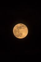 Blue Moon Rising Vertical Orientation