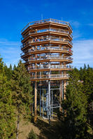 Forest canopy tower and walkway, footpath above treetops