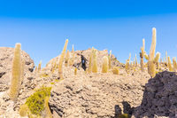 Bolivia Uyuni rocks and cactus on Incahuasi island
