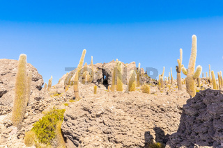 Bolivia Uyuni rocks and cactus on Incahuasi island