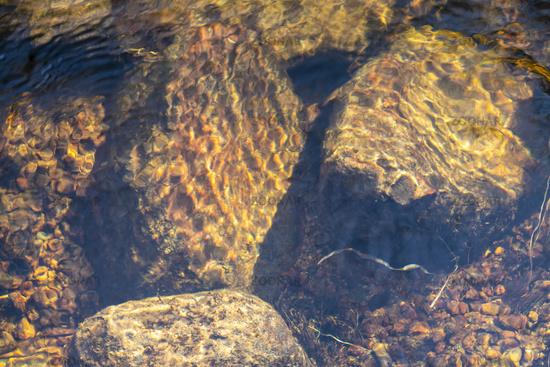 Creek details, Muddus National park, world heritage Laponia, Lapland, Sweden