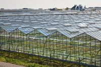 Greenhouse agricultural production