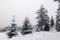 Winter mit Schnee im Thüringer Wald bei Oberhof