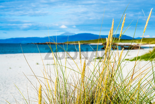 Coastal Grass and Dunes With White Sand and Blue Sea in the Background on the Isle of Iona in Scotland