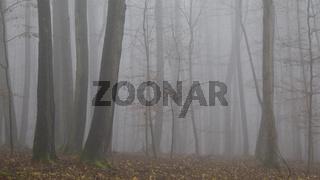 Nationalpark Hainich - Herbstwald im Nebel