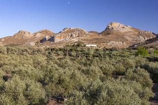 Landschaft mit Bergen und Olivenbäumen auf Kreta, Griechenland