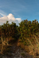 Small spruce dune