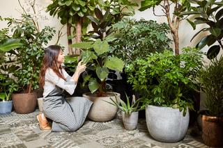 Floristin oder Gärtnerin bei Pflege von Grünpflanzen