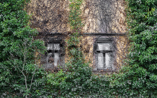 Two old box windows and a overgrown facade