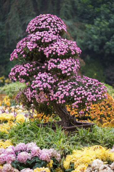 Bonsai tree with flowers in China
