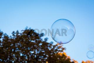 Single Round Circular Soap Bubble Blue Sky Nature Background Orange Tree Autumn Seasonal Floating Air Shiny