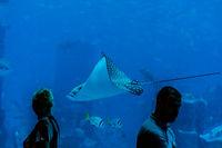 Floating roche in the Aquarium, DUBAI