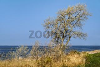 Baum am Schaproder Bodden