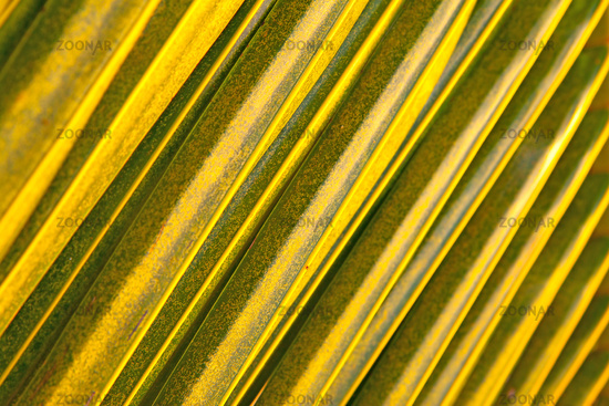 Palm leaves  - abstract texture