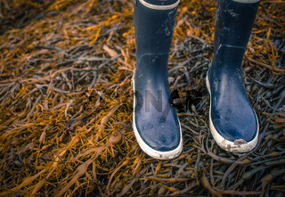 Rubber Boots On Seaweed