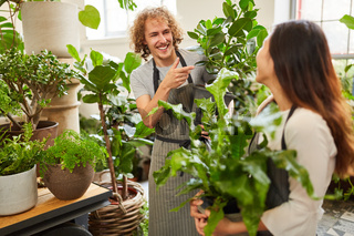 Floristen Team im Gartencenter mit Grünpflanzen