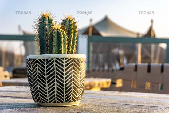 Cactus plant at the beach