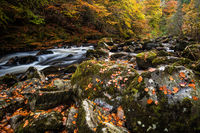 Autumn on the River Braan in Perthshire