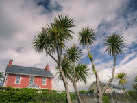 House residence with palm trees in front in ireland