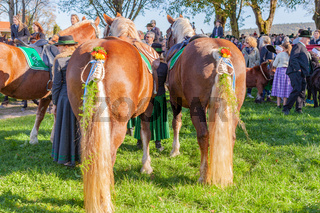 Warngau, Deutschland, Bayern 27.10.2019: Rückansicht eines Pferdes bei der Leonhardifahrt Warngau