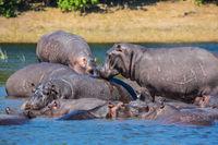 The extreme tourism in Okavango Delta