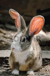 Portreit of a Rabbit