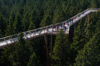Tree canopy walk, treetop walkway, footbridge through the forest, adventure in nature
