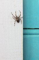Big spider at a rural home